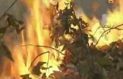 incendio boschivo all elba