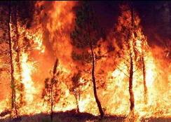 incendio boschivo elba